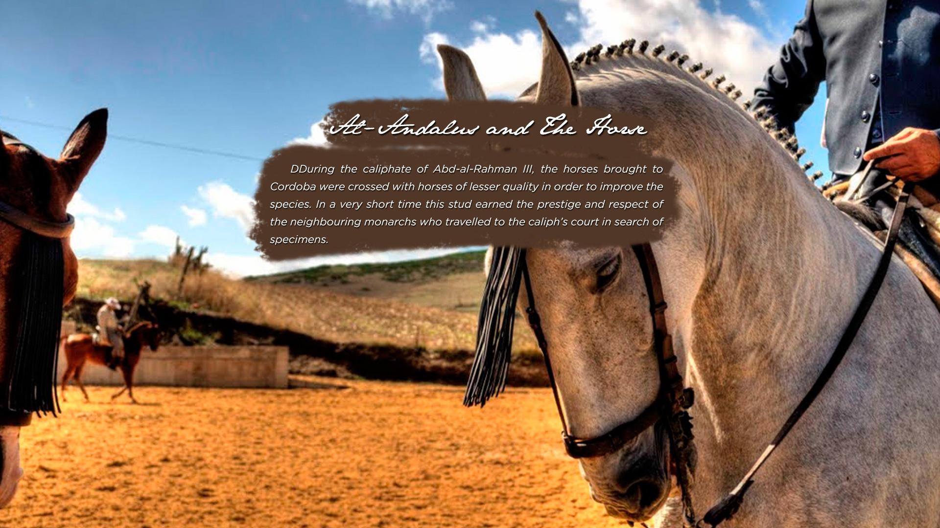 caballo6a
