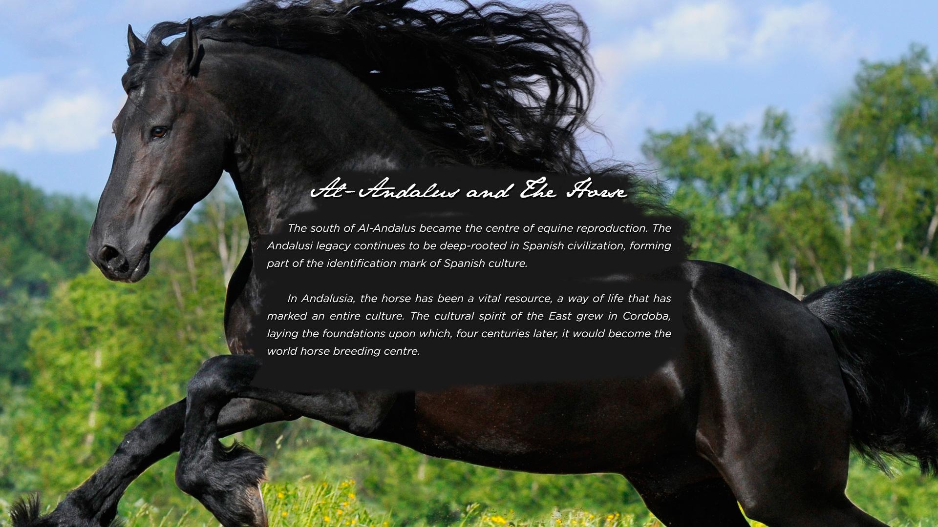 caballo7a